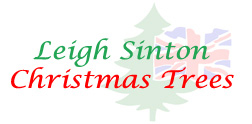 Leigh Sinton Christmas Trees